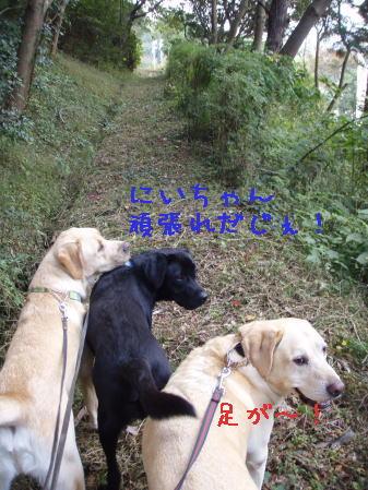 20071108140844.jpg