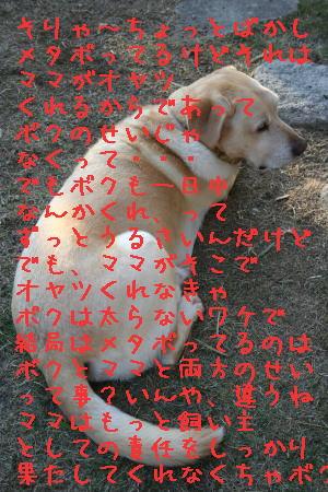 20071119145530.jpg