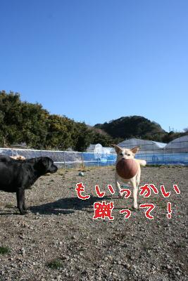 janaiwayo5.jpg