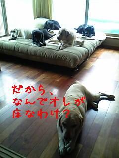 oyako2.jpg
