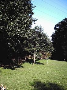 20061020165956.jpg