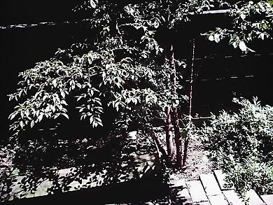 IMAG7596.jpg