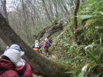 beech tree tunnel