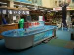 squid pool