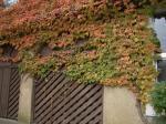 autumn wall