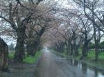 桜トンネル戸切地編