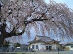 法亀寺と桜