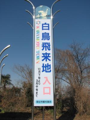 kohakuchyou1