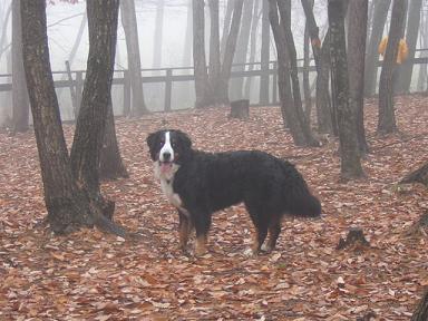 霧がでてきたなあ~