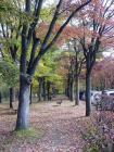 1028hirosakijo1.jpg