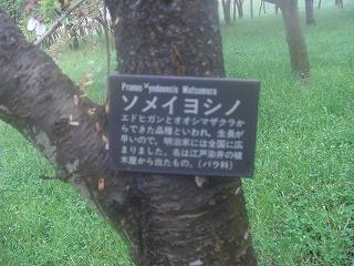 ブログ春庄内空港周辺 013