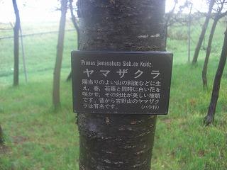 ブログ春庄内空港周辺 010