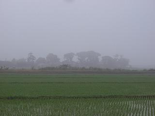 ブログカルガモ有機栽培梅雨入り 004