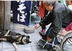 東淵修さんと路傍の犬