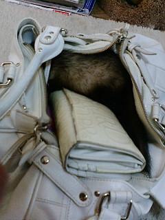 かばんの中・・・