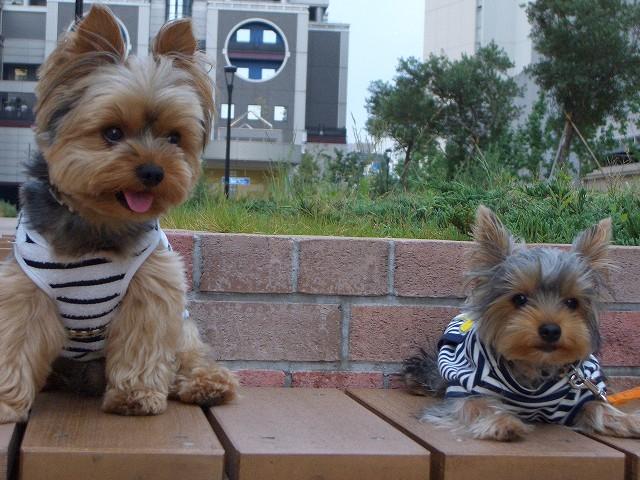 tsuyablog-CIMG5427.jpg