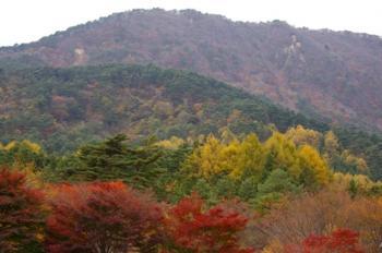 半田山の紅葉