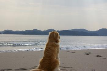 海を眺めて。。。