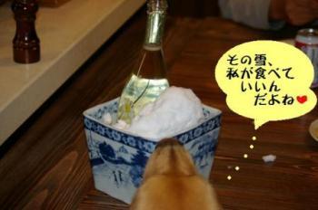 雪で冷すワイン!