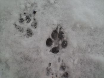 かわいい足跡♥