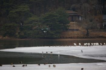 凍った南湖