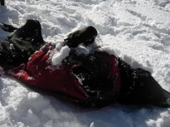 クーちゃ雪を満喫♪