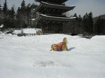 やっぱり雪遊び♪