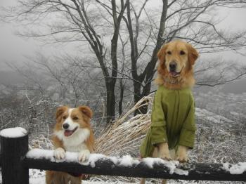 雪だよーん♪