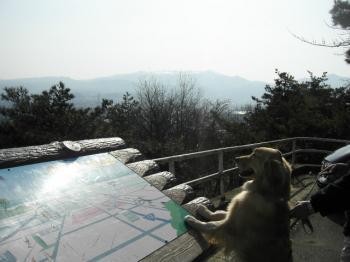 信夫山から福島市内を望むナナ