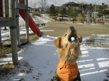 雪、雪~~♪♪
