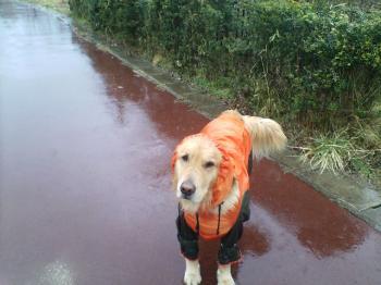 雨降り(´~`*)ξ
