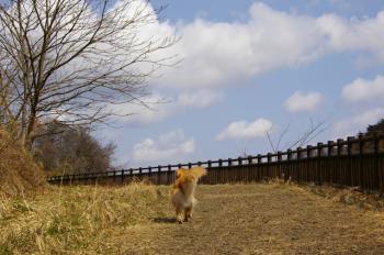 青空の下のお散歩♪