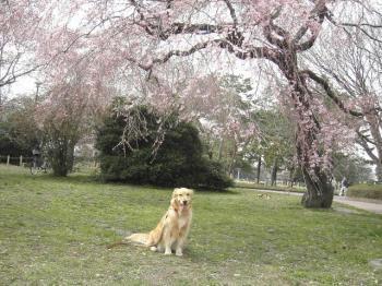 モデル犬ナナ
