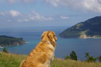 金華山を眺める