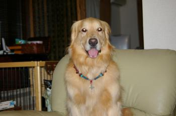 私はモデル犬♪♪