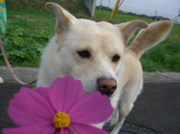 あたしは、お花に興味ありません・・・