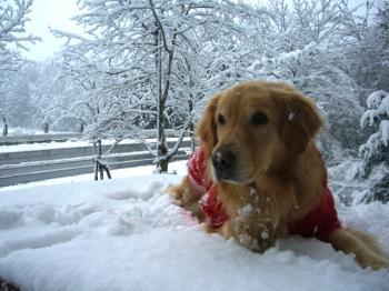 雪大好きっ子♪