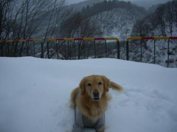 やっぱり雪に埋もれて・・・