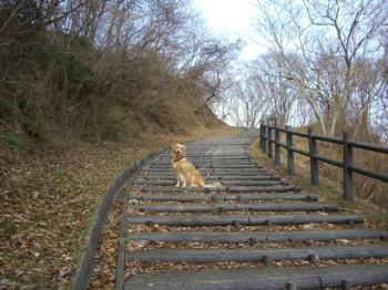 階段登り♪