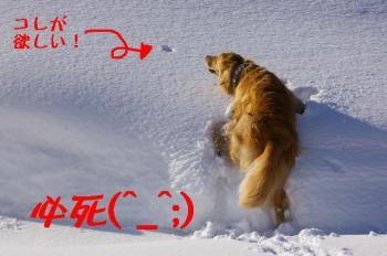 真剣に雪を食べようとするナナ
