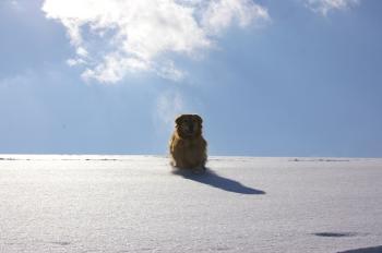 やはり必死で雪を追いかけるナナ
