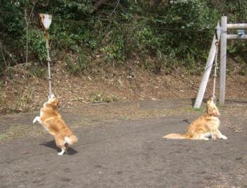 ロープ遊びo(^-^)o