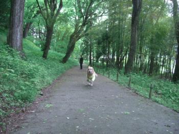 森を歩いて・・・