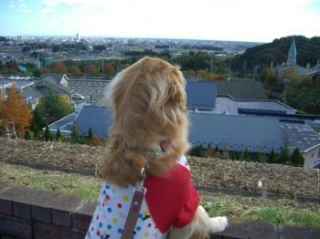 町を眺めて