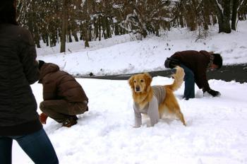 ひたすら雪を食べるナナ(^_^;)