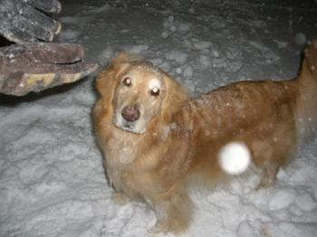 雪大好き♥