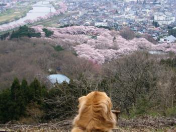 一目千本桜だぁぁ)^o^(