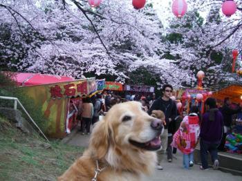 桜祭開催中です☆