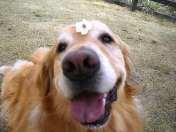 お花見楽しい~~♪