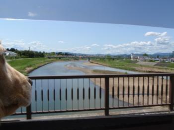 川にかかる鯉のぼり~~!